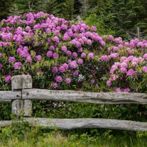 Robin - Log Fence with Flowers